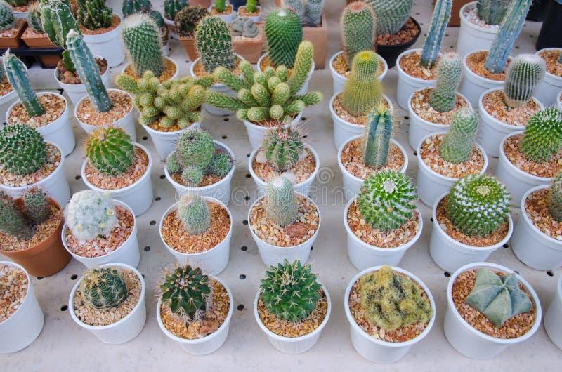 petits diff rents types d 39 usines de cactus photo stock image 48902203. Black Bedroom Furniture Sets. Home Design Ideas