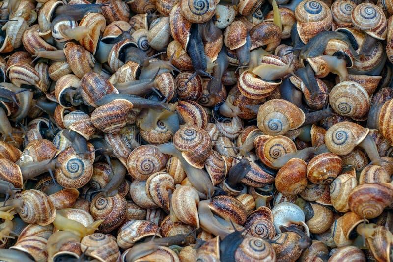 Petits escargots de mer au marché encore vivant photo stock