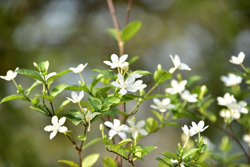 Petits fleur et arbre blancs photos stock