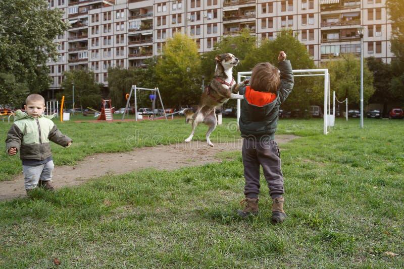 Petits garçons jouant avec le chien image libre de droits