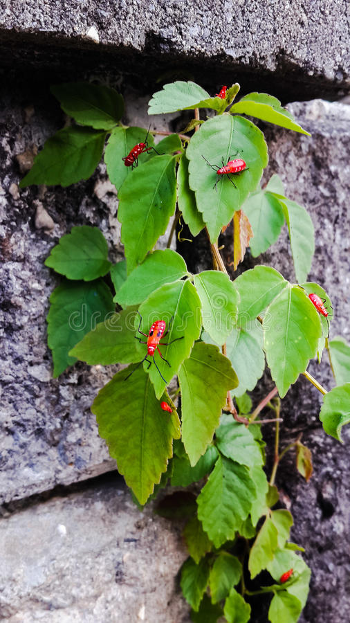 Petits insectes photographie stock libre de droits