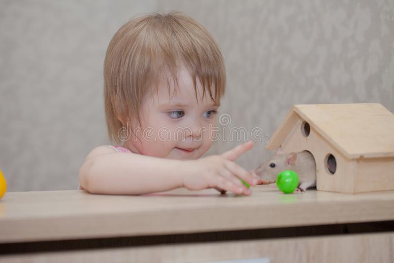 Petits jeux d'enfant avec la souris La fille regarde le rat images libres de droits