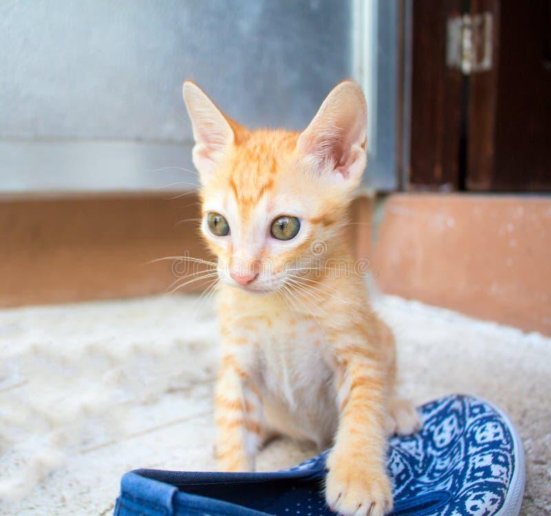 Petits jeux rouges de chaton avec la chaussure La vie extérieure du chat domestique image libre de droits