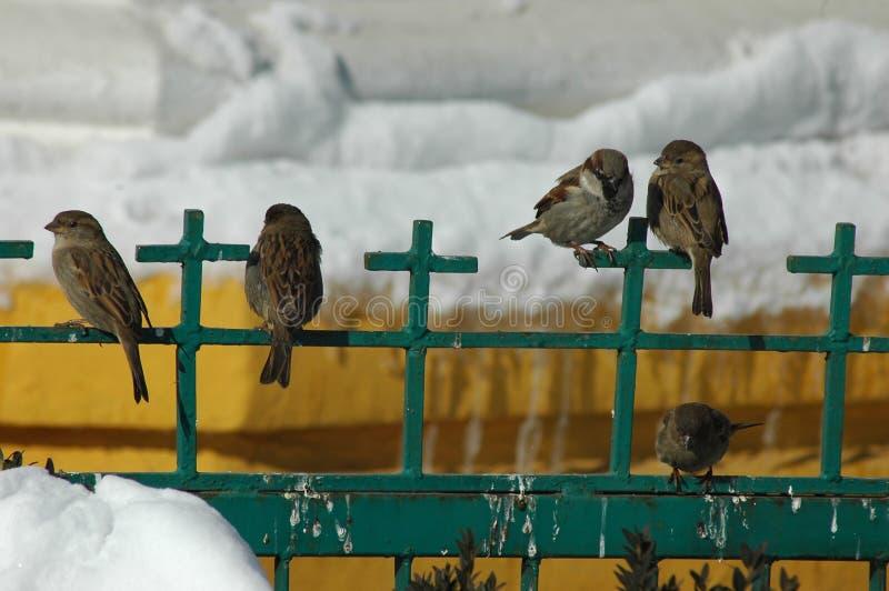 Petits oiseaux dans l'horaire d'hiver image libre de droits
