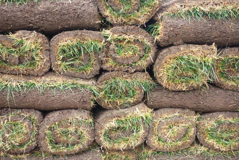 Petits pains d'herbe de gazon images stock