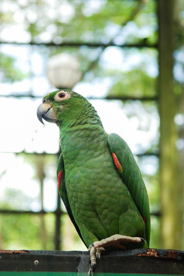 Petits perroquets en parc naturel image libre de droits