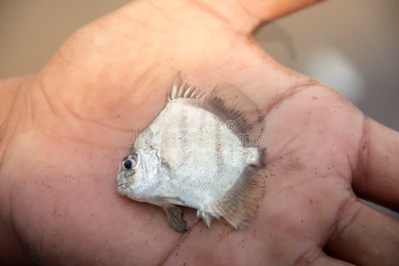Petits poissons à disposition de pêcheur photo libre de droits