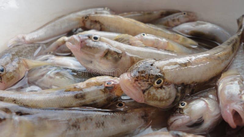 Petits poissons photo stock