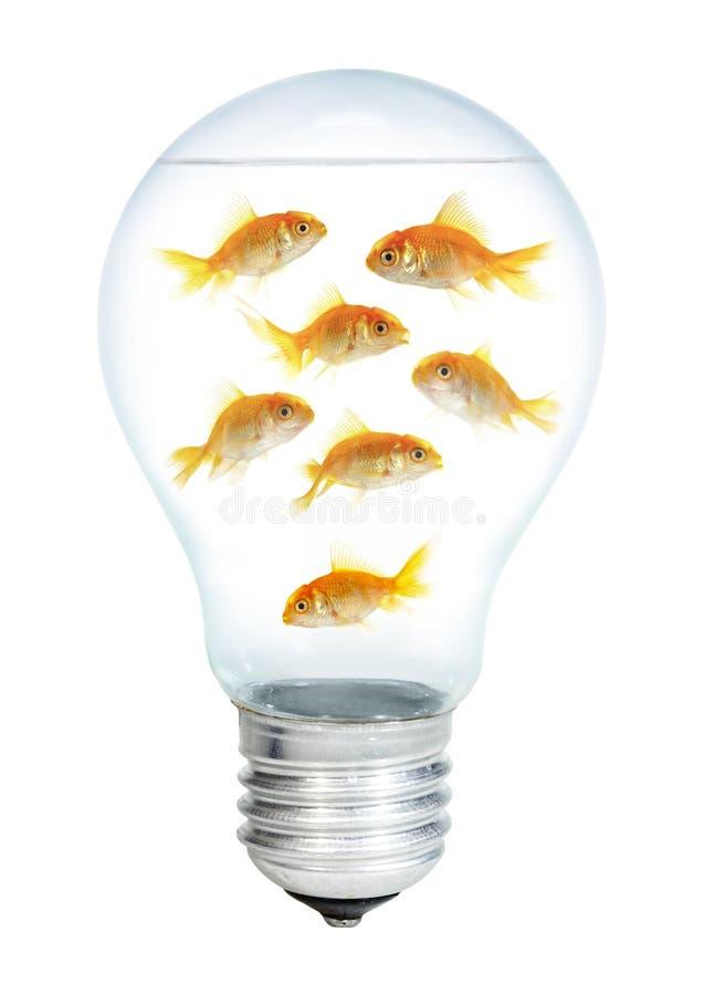 Petits poissons d'or dans l'ampoule image libre de droits