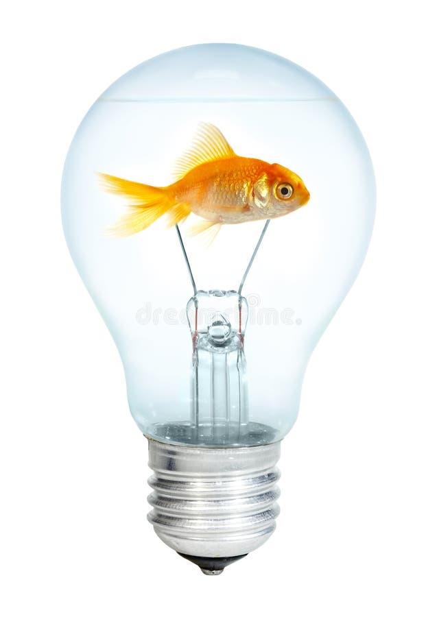 Petits poissons d'or dans l'ampoule photos libres de droits