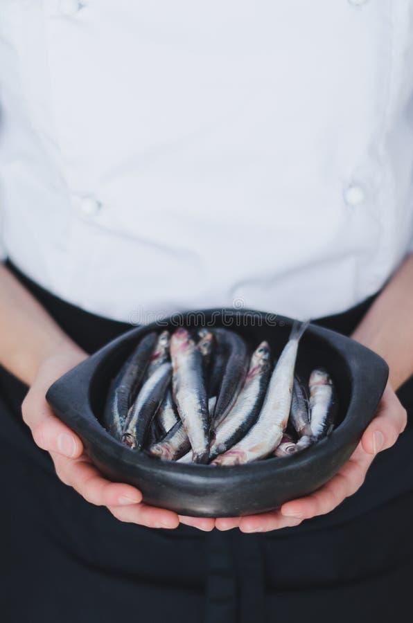 Petits poissons dans la cuvette en céramique au-dessus des mains du ` s de chef images libres de droits