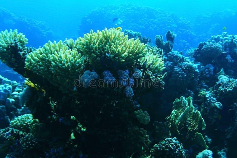 Petits poissons de corail photos libres de droits