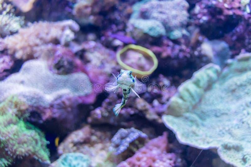 Petits poissons exotiques images libres de droits