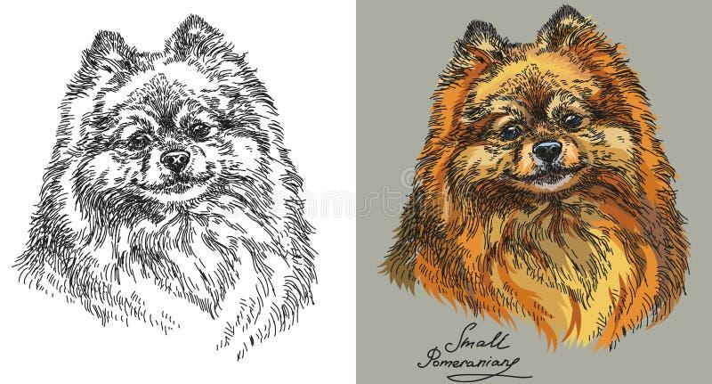 Petits Pomeranian en couleurs et noir et blanc illustration libre de droits