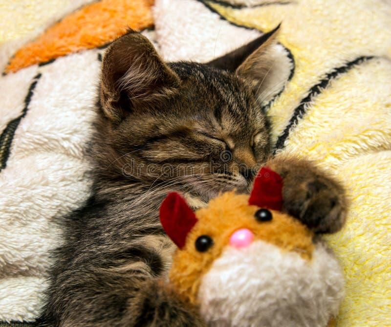 Download Petits Sommeils Mignons De Chaton étreignant Le Jouet De Peluche Image stock - Image du pets, mignon: 45369445