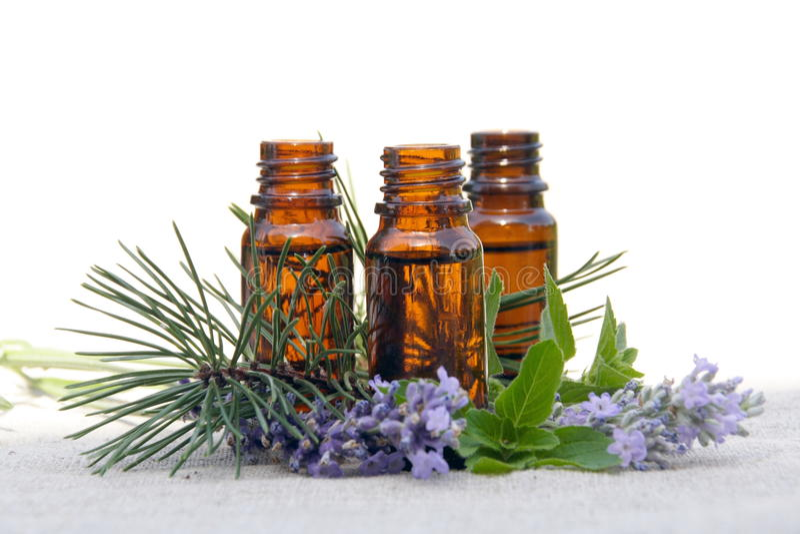 Petróleo del aroma en botellas con lavanda, el pino y la menta fotografía de archivo libre de regalías