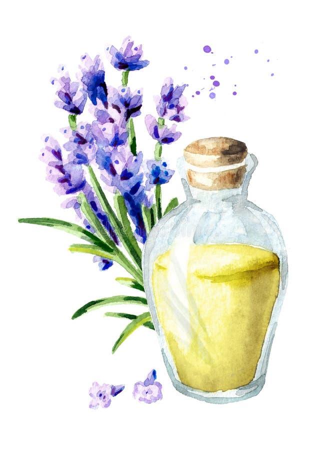 Petróleo esencial de la lavanda Ejemplo vertical dibujado mano de la acuarela, aislado en el fondo blanco libre illustration