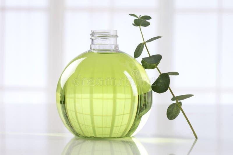 Petróleo essencial do eucalipto fotografia de stock