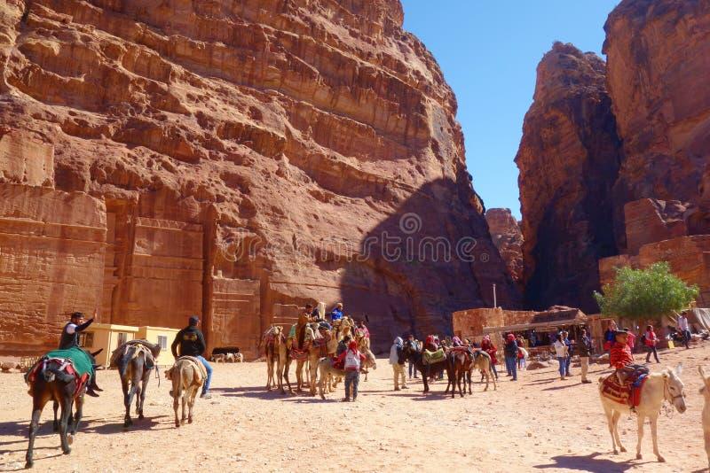 PETRA, Giordania - cammelli beduini ed asini che aspettano i turisti alla città antica archeologica di PETRA, Wadi Musa, E media  immagine stock libera da diritti