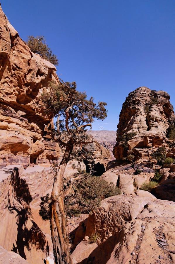 Download Petra, Jordan stock photo. Image of jordan, rock, building - 13426748