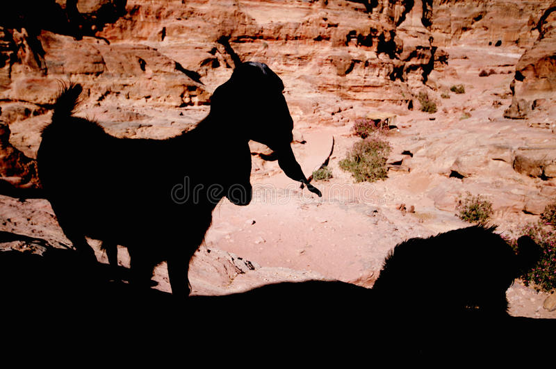 Download Petra, Jordan stock image. Image of architecture, middle - 13427167
