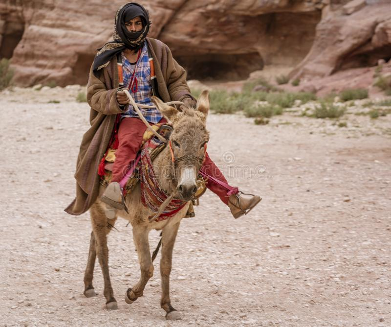Petra, Jordania osły Jest Pospolitymi Przewiezionymi zwierzętami w Petra Jordania - 2019-04-21 - obrazy royalty free