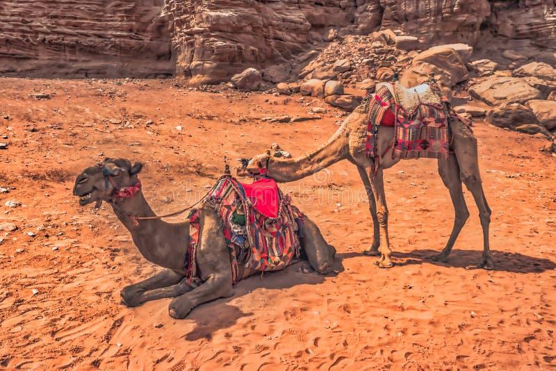 Petra - Oktober 01, 2018: Fördärvar av den forntida staden av Petra, under av världen, Jordanien royaltyfria foton