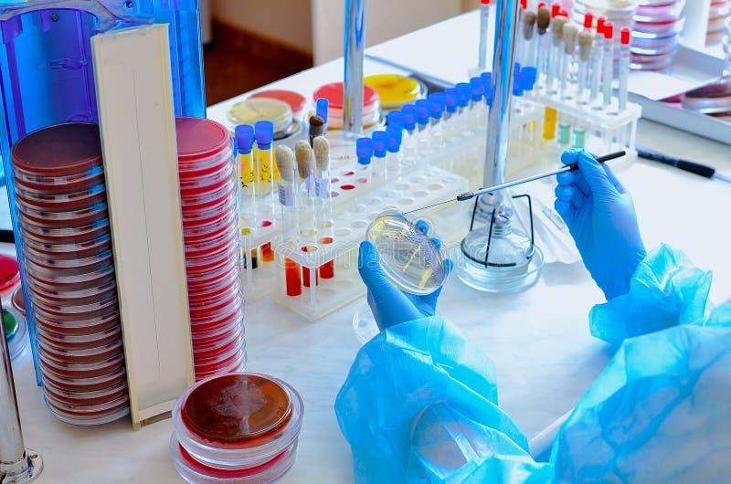 Petri πιάτο Μικροβιολογικό εργαστήριο Φόρμα και μυκητιακοί πολιτισμοί Βακτηριακή έρευνα στοκ φωτογραφίες