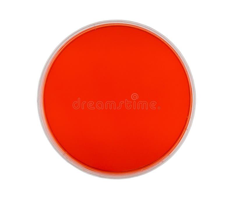 Petri Dish con agar rojo imagenes de archivo