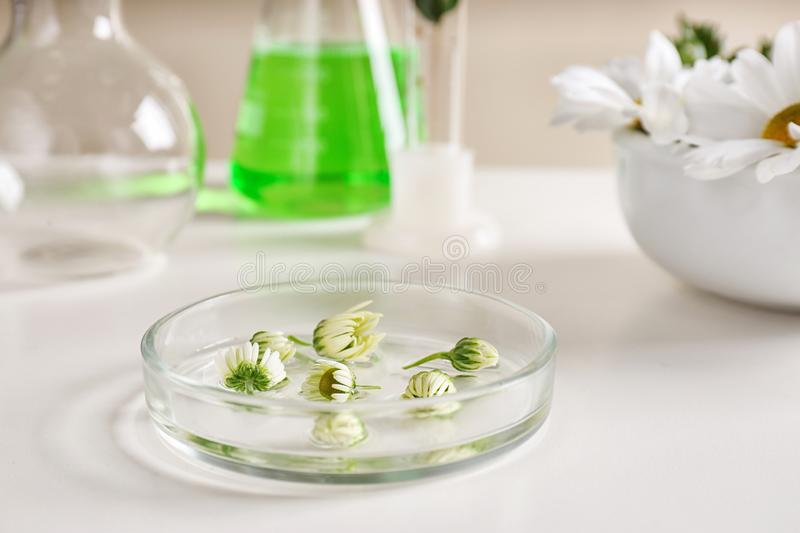 Petri dish with flowers on table. stock image