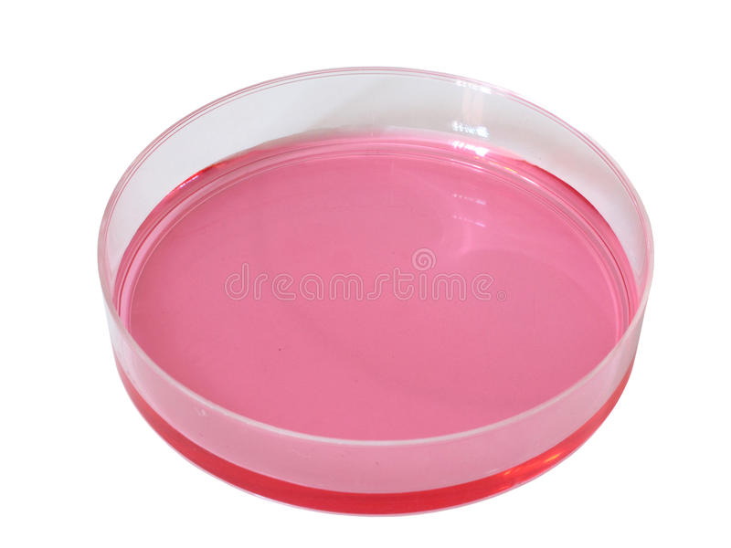 Petri dish with red liquid royalty free stock photography