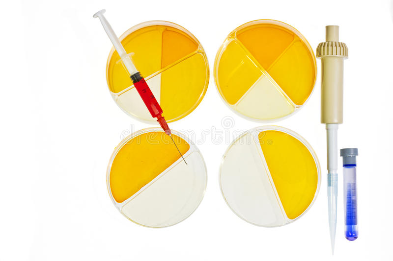 Petri dishes medical research concept royalty free stock photography