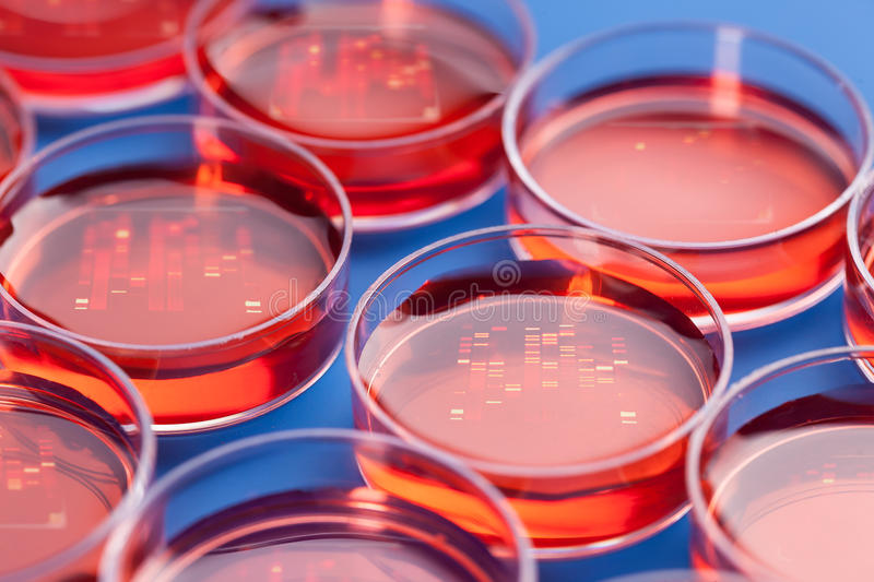 Petri dishes with samples royalty free stock photography