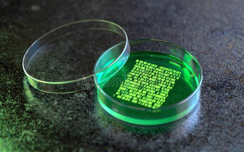 Petri dishes with samples for DNA sequencing stock illustration