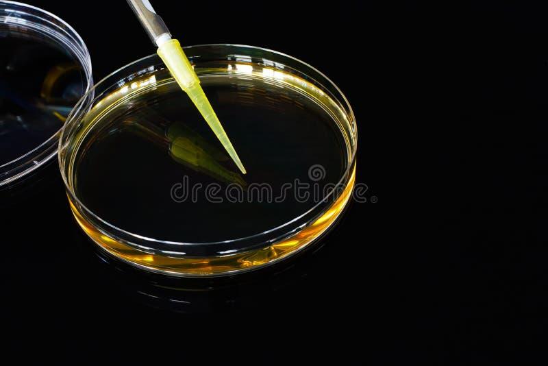 Petri naczynia czerni tło zdjęcie stock