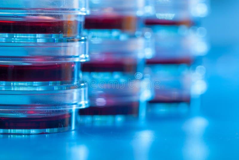 Petri naczynia w błękita światła materiale Laborancki pojęcie obraz royalty free