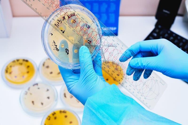 Petri naczynie Mikrobiologiczny laboratorium Foremka i fungal kultury Bakteryjny badanie obrazy royalty free