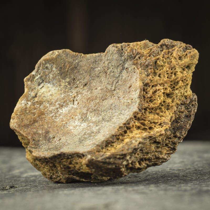 Petrified bone of a mammoth. archeology royalty free stock image