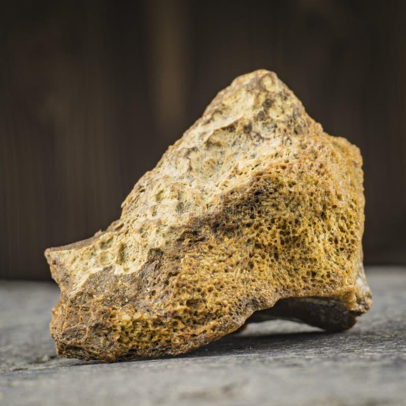 Petrified bone of a mammoth. archeology royalty free stock photography