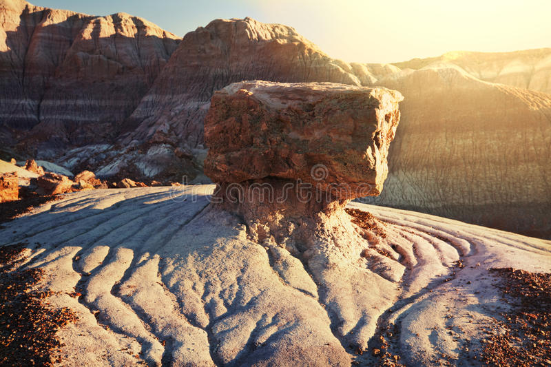 Petrified forest royalty free stock photos