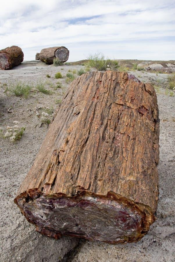 Petrified Forest National Park - Arizona. stock image