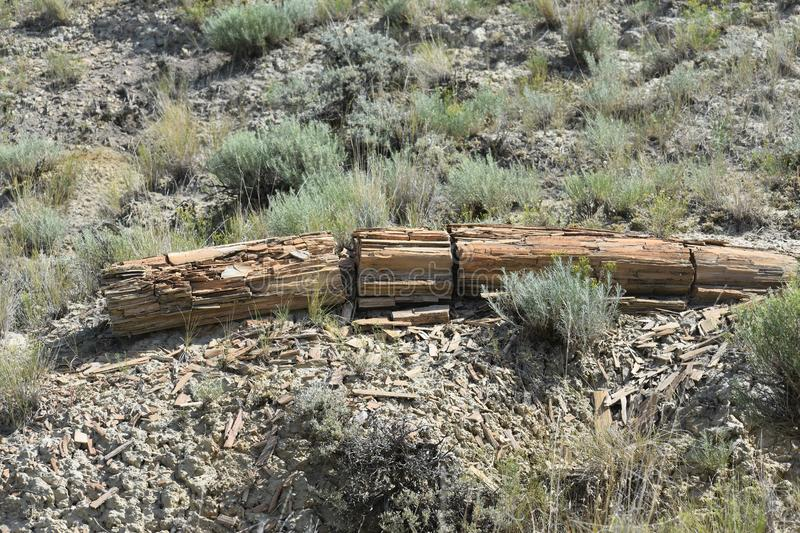 A fairly large petrified log. Petrified or fossilized wood in a look into the past of our landscapes. At one time Wyoming, which is now high plains and sagebrush royalty free stock photo
