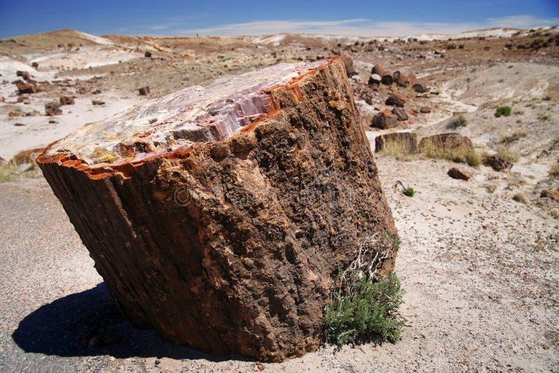 Petrified Log Stock Photos