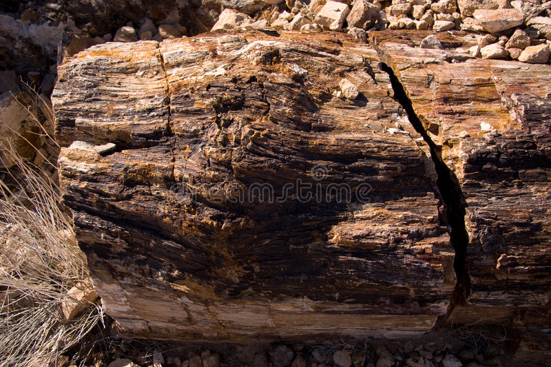 Petrified Log royalty free stock image