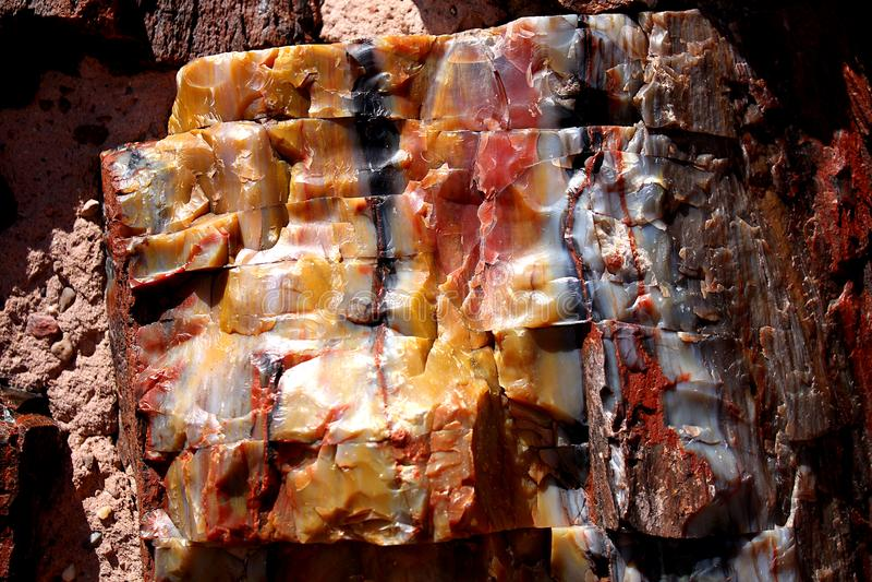 Petrified wood log close up. stock photo