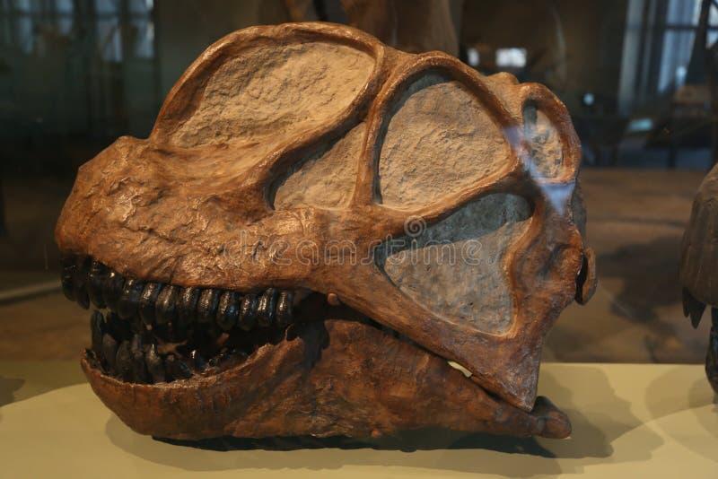 Petrified Monster Head stock photography