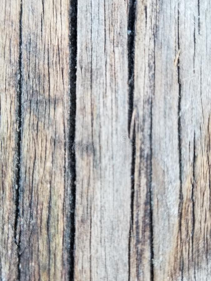 Petrified Old Wood stock photography