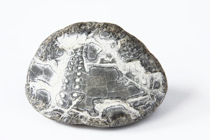 Petrified sea-urchin royalty free stock images