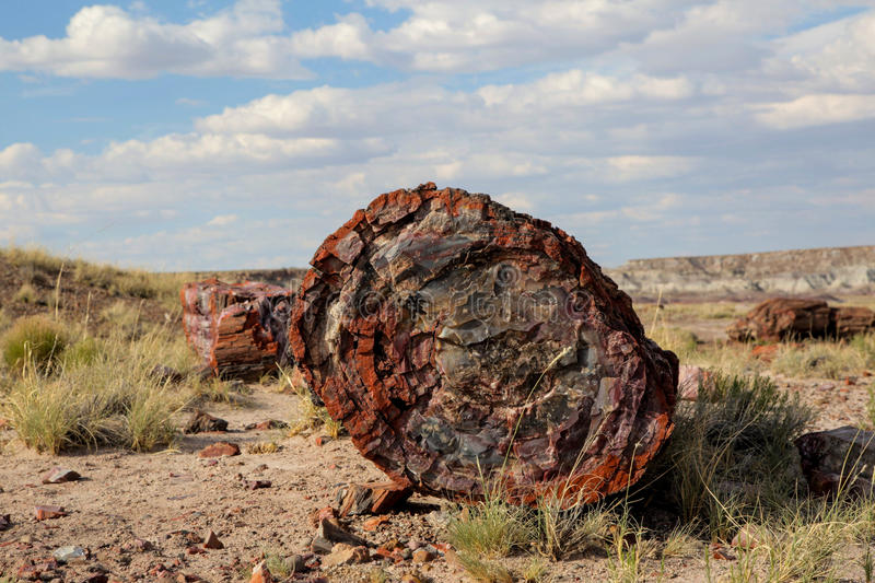 Petrified Tree Trunk royalty free stock image