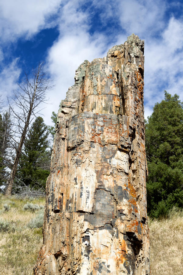 Petrified Tree royalty free stock photo